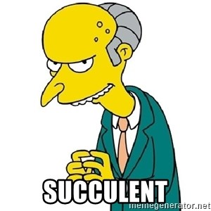 Mr Burns meme -  Succulent