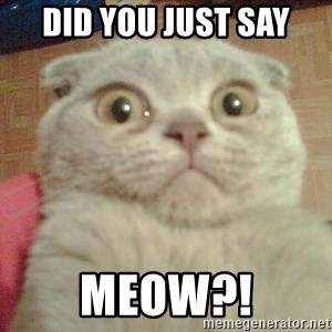 GEEZUS cat - did you just say meow?!