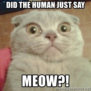 GEEZUS cat - did the human just say meow?!