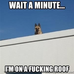 Roof Dog - Wait a minute... I'm on a fucking roof