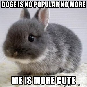 ADHD Bunny - Doge is no popular no more Me is more cute