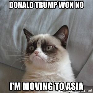 Grumpy cat 5 - donald trump won no i'm moving to asia