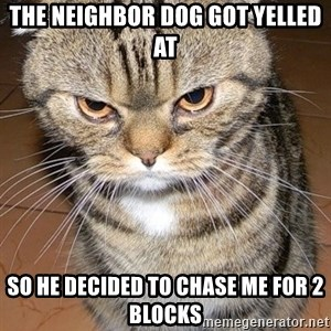 angry cat 2 - The neighbor dog got yelled at so he decided to chase me for 2 blocks