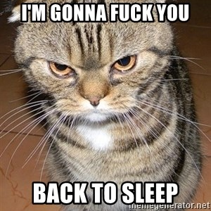 angry cat 2 - I'm gonna FuCK you Back to sleep