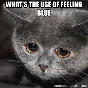 sad cat - what's the use of feeling blue