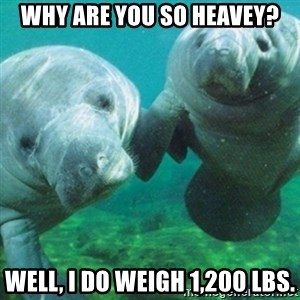 Manatee - Why are you so heavey? Well, I do weigh 1,200 lbs.
