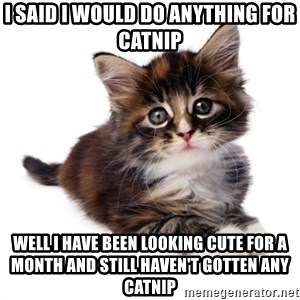 fyeahpussycats - I said I would do anything for catnip Well I have been looking cute for a month and still haven't gotten any catnip
