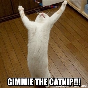 praise the lord cat -  gimmie the catnip!!!