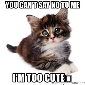 fyeahpussycats - You can't say no to me I'm too Cute😍