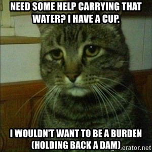 Depressed cat 2 - Need some help carrying that water? i have a cup. I wouldn't want to be a burden (holding back a dam)