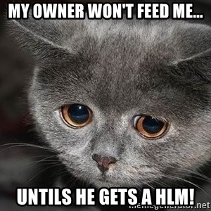 sad cat - My owner won't feed me... untils he gets a hlm!