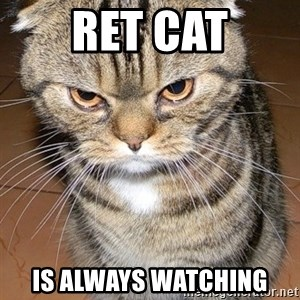 angry cat 2 - Ret cat is always watching