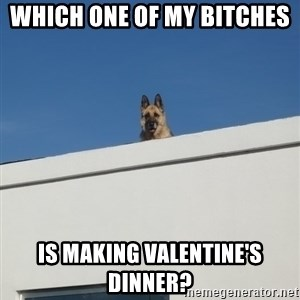 Roof Dog - Which one of my bitches  Is making valentine's dinner?