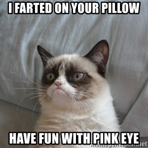 Grumpy cat 5 - I farted on your pillow Have fun with pink eye