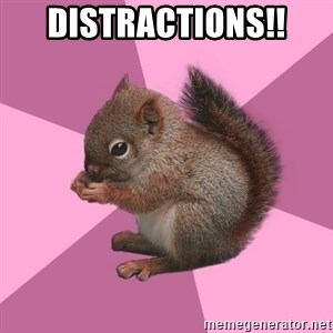 Shipper Squirrel - distractions!!