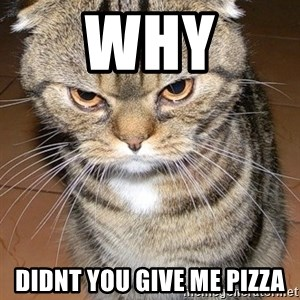 angry cat 2 - why didnt you give me pizza
