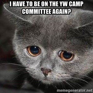 sad cat - I have to be on the yW cAmp committee again?