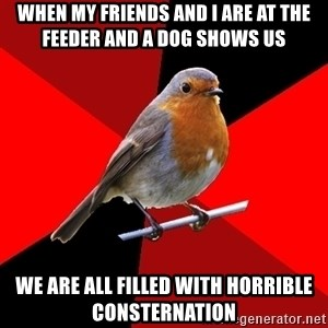 Retail Robin - When my friends and I are at the feeder and a dog shows us We are all filled with horrible consternation