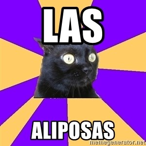 Anxiety Cat - LAS ALIPOSAS
