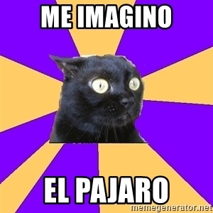 Anxiety Cat - ME IMAGINO EL PAJARO