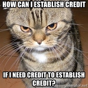 angry cat 2 - HOW CAN I ESTABLISH CREDIT IF I NEED CREDIT TO ESTABLISH CREDIT?
