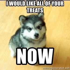 Baby Courage Wolf - I would like all of your treAts Now