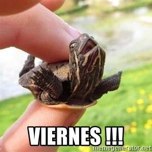excited turtle -  VIERNES !!!