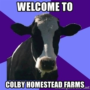 Coworker Cow - Welcome to Colby homestead farms