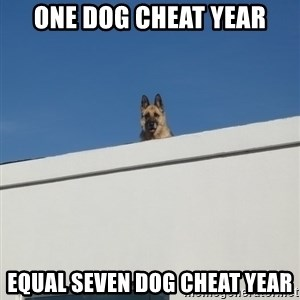 Roof Dog - One dog cheat year equal seven dog cheat year
