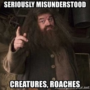 Hagrid - Seriously misunderstood creatures, Roaches