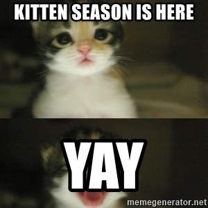 Adorable Kitten - KiTten season is here Yay