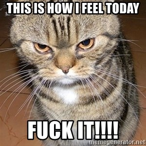 angry cat 2 - This is how i feel today Fuck it!!!!