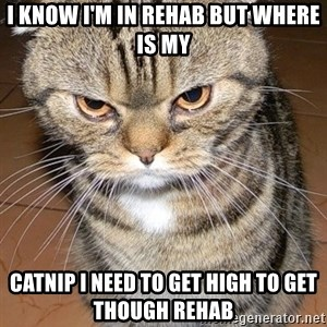 angry cat 2 - I know i'm in rehab but where is my Catnip i need to get high to get though rehab