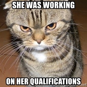 angry cat 2 - She was working on her qualifications