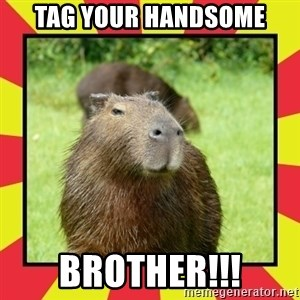 Handsome Capivara  - Tag your handsome Brother!!!
