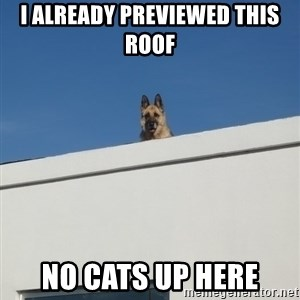 Roof Dog - I already Previewed This Roof No CAts up here