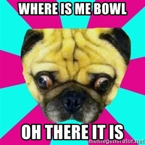 Perplexed Pug - where is me bowl oh there it is