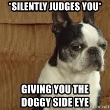 side eye doggie - *silently judges you* giving you the                                                          doggy side eye