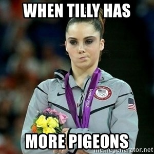 McKayla Maroney Not Impressed - when tilly has more pigeons