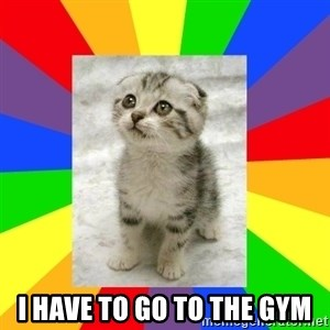 Cute Kitten -  I HAVE TO GO TO THE GYM