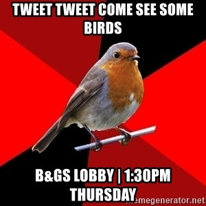 Retail Robin - TWEET TWEET COME SEE SOME BIRDS B&GS LOBBY | 1:30Pm THURSDAY
