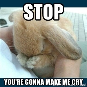 Bunny cry - STOP You're gonna make me cry