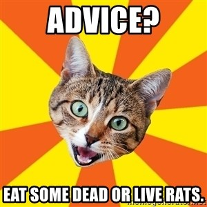 Bad Advice Cat - Advice? eat some dead or live rats.