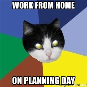 Winnipeg Cat - work from home on planning day