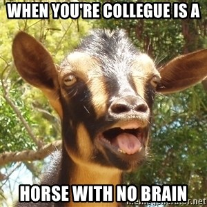 Illogical Goat - when you're collegue is a horse with no brain