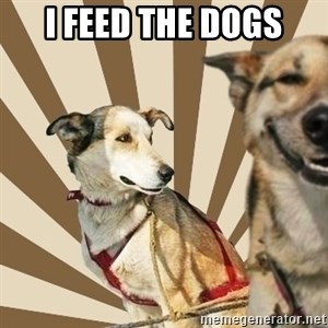 Stoner dogs concerned friend - I feed the dogs