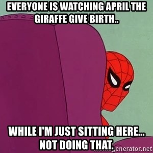 Suspicious Spiderman - Everyone is watching April the giraffe give birth.. While I'm just sitting here... Not doing that.