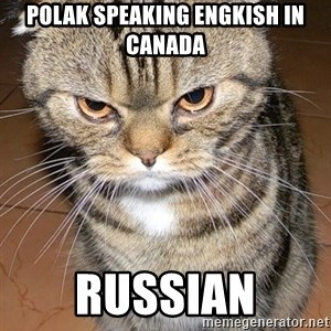 angry cat 2 - Polak speaking engkish in canada Russian