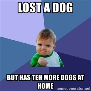 Success Kid - Lost a dog but has teh more dogs at home