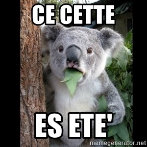 Koala can't believe it - ce cette Es ETE'